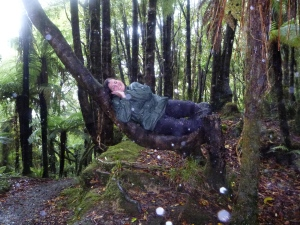 Being silly in a tree on my rain soaked hike on Pororari River Track.